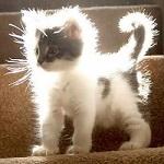 99px.ru аватар Пушистый бело-серый маленький котенок