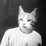Аватар Прикольный котенок в футболке
