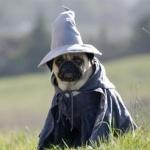 Аватар Мопс в костюме мага сидит на траве