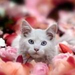 Аватар Белая кошка среди цветов