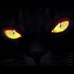 Аватар Морда черного кота с желтыми глазами