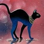 Аватар Черная кошка в ошейнике идет по воде