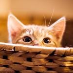 Аватар Мордочка котенка выглядывающего из корзины