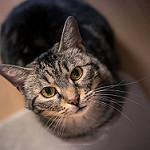 Аватар Кошка смотрит вверх, фотограф Isabelle Trak