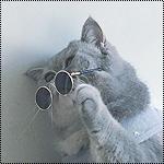Аватар Кот снимает солнечные очки