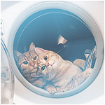 99px.ru аватар Котики в стиральной машине