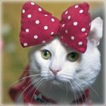 Аватар Белая кошка с бантиком на голове