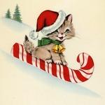 Аватар Котенок едет по снегу на сахарной трости