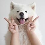 Аватар Счастливая собака с человеческими руками