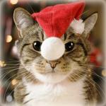 Аватар Кот в новогодней шапочке