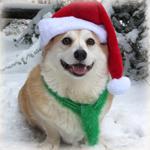Аватар Вельш-корги в новогодней шапочке и шарфике сидит на снегу