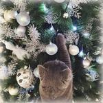 Аватар Пепельный кот трогает лапками веточки новогодней елки