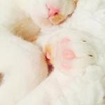 Аватар Розовый носик и лапка спящего котика с розовыми подушечками крупным планом