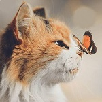 Аватар Мордочка пятнистой кошки в профиль с бабочкой на носу