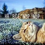 Аватар Рыжий котик лежит на траве (на все мур мур)