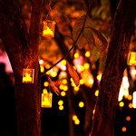 Аватар Фонари на уже пожелтевших деревьях