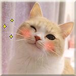 Аватар Кавайный котик подмигивает