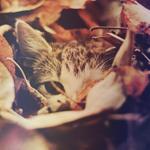 Аватар Кошка в осенней листве