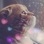 Аватар Кошка смотрит в окно, на котором капли от дождя