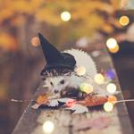 Аватар Ежик в ведьменской шапочке на деревянных перилах