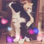 Аватар Котик обнимает другого котика