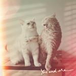 Аватар Два котика-белый и полосатый (You and me)
