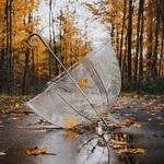 Аватар Зонт лежит на дороге под падающей листвой