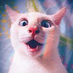 99px.ru аватар Белый кот сильно удивлен