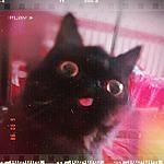 Аватар Смешной черный кот