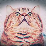 Аватар Полосатый пухлый кот шокирован тем, что он видит над собой