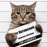 Аватар Кот с табличкой преступника со статьей про обоссанные тапки (Кот Котовский написал в ботинок)