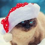 Аватар Голубоглазый кот в праздничном колпаке (Happy NEW YEAR / Счастливого Нового Года)