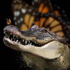 Аватар Крокодил с бабочкой на пасти