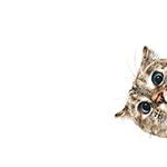 Аватар Любопытный кот заглядывает в кадр