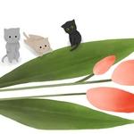 Аватар Котята сидят у тюльпана