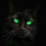 Аватар Черная кошка с зелеными глазами