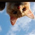 Аватар Любопытная мордочка рыжего котенка