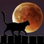 Аватар Силуэт черного кота на фоне ночного неба с кровавой Луной