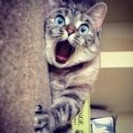 Аватар Голубоглазый кот лежит на дороге