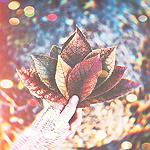 Аватар Осенние листья в женской руке