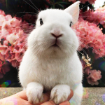 Аватар Белый кролик на фоне розовых цветов