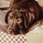 Аватар Пес лежит на постели