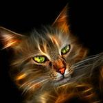 Аватар Зеленоглазая кошка на темном фоне