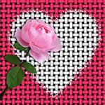 Аватар Розовая роза на фоне сердечка