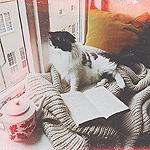 99px.ru аватар Кошка смотрит в окно