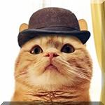 Аватар Рыжий кот косплеит доктора Ватсона