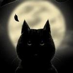 99px.ru аватар Черный кот на фоне полной луны