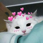 99px.ru аватар Белый кот с сердечками
