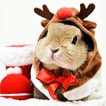 99px.ru аватар Кролик в костюме оленя Рудольфа сидит возле красного сапога с меховой оторочкой