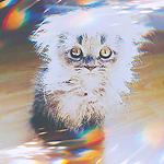 99px.ru аватар Пушистый котенок сидит на полу